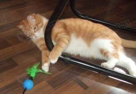 如何使用逗猫棒?有什么技巧